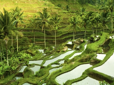 destination Ubud